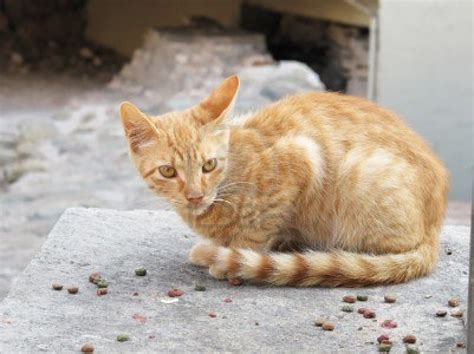 Dijamin Clear St Kitties how to take care of a stray cat dinzie