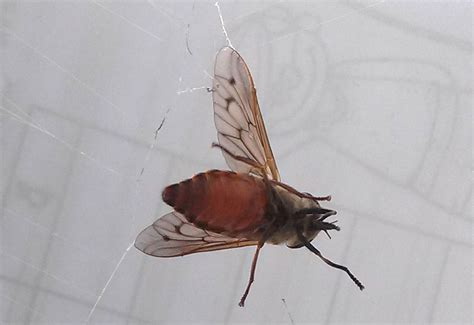 horse flies in my house horse flies and deer flies archives page 4 of 12 what