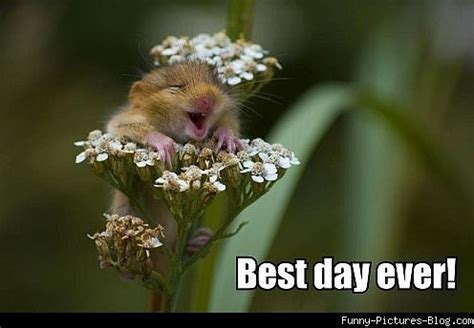 Flower Meme - tafe life