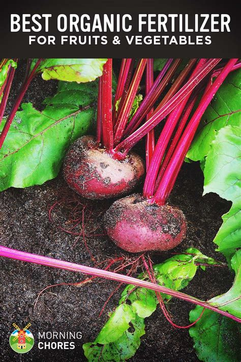 best garden fertilizer vegetables 6 best organic fertilizer for fruits and vegetables reviews