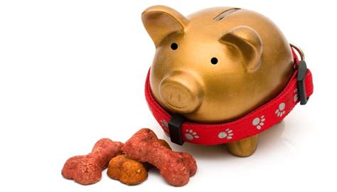 do puppies really need puppy food expensive food brands are they worth the high cost top tips