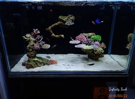 ideas  floating aquascape page  reefreef saltwater