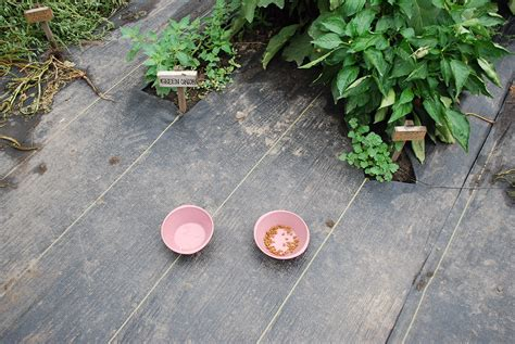 witty cat food beets me kate coury s farmhouse