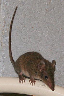 Bodypack Big Mice 1 0 Black ð ñ ð ñ ð ñ ñ ðµ ð ñ ñ ð â ð ð ðºð ð ðµð ð ñ
