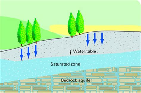 The Location Of The Water Table Is Subject To Change Water Cycle Water Goes Into The Earth Lollies Place