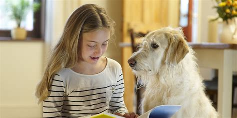 reading to dogs struggling students read to therapy dogs find confidence in judgment free zone