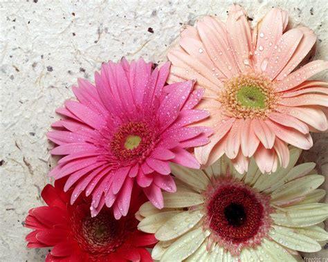 imagenes de flores wallpaper coleccion de flores hd my pictures world