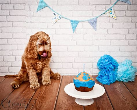 with dogs cake smash with friendly cake c t images
