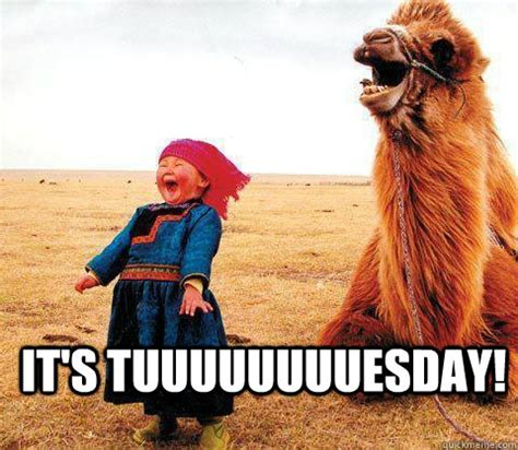 Tuesday Funny Memes - its tuesday memes quickmeme