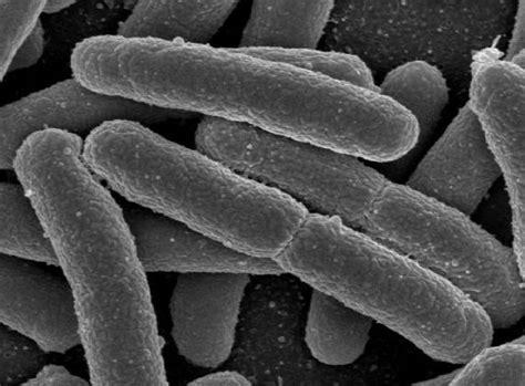 indahnya sains mikroorganisma