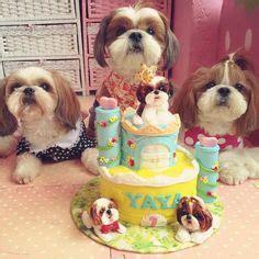 shih tzu singing happy birthday happy birthday on collars happy birthday puppy and happy birthday