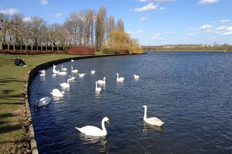 some wader at the willen lake szimistyle birding