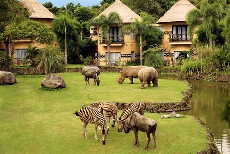 bali safari and marine park bali activity things to do in bali with the ultimate guide