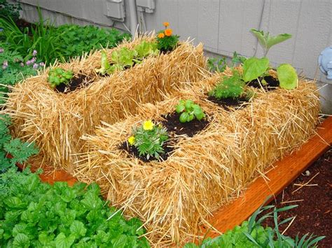 Planters Hay by What A Great Idea Hay Bales As Garden Planters Or Use