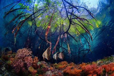 best underwater mangroves underwater www pixshark images galleries
