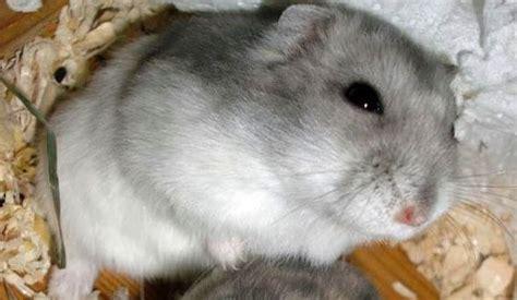 bettdecke wegziehen hamster die kleinen l 246 wen radio tirol