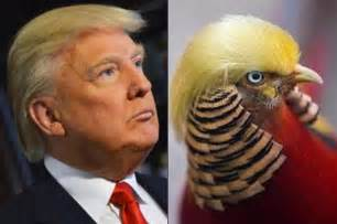 donald hair color meet the bird with donald s hair