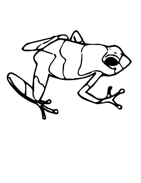 jumping frog coloring page poisonous tree frog drawings www imgkid com the image