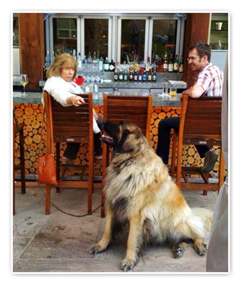 friendly cafe pet friendly restaurants pet friendly vacation friendly restaurant