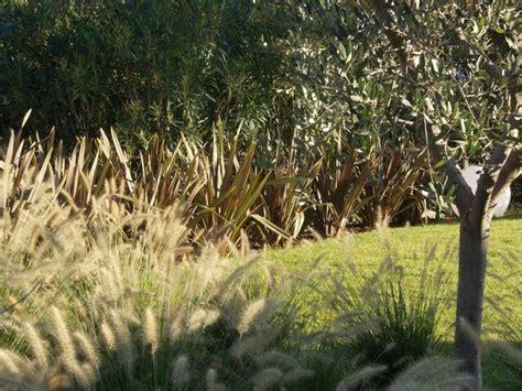 giardini con ulivi realizzazione giardino arido numana