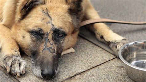 aviso este repaso al maltrato europeo a los refugiados inactiva la ley de protecci 243 n animal en oaxaca