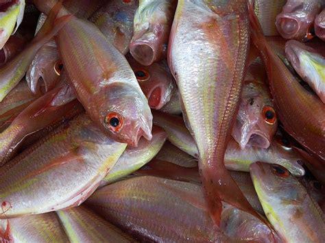lebih banyak ikan di laut atau bintang di langit kisah inilah 9 ikan laut yang sering diolah untuk dikonsumsi