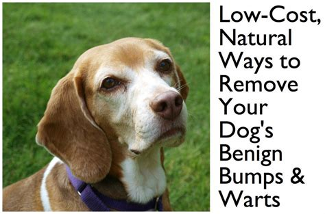 how to get rid of skin on dogs how to get rid of growths on dogs for five dollars breeds picture