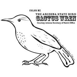 az coloring pages free coloring pages of arizona birds