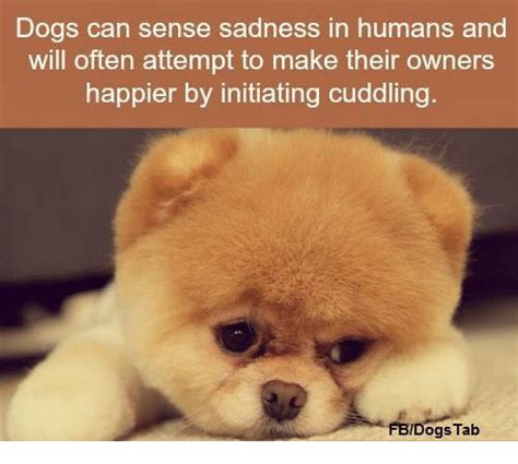 can dogs sense sadness dogs can sense sadness in humans and will often attempt to make their owners happier