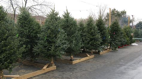 cartner christmas tree farm retail tree care