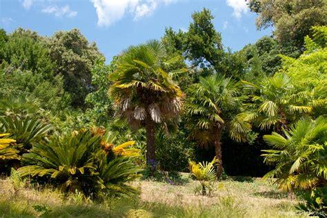 mediterrane pflanzen f r den garten mediterrane pflanzen fur den garten best 28 images