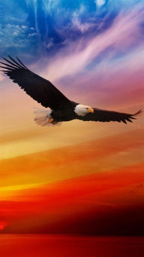 wallpaper iphone eagle american eagle wallpaper wallpapersafari
