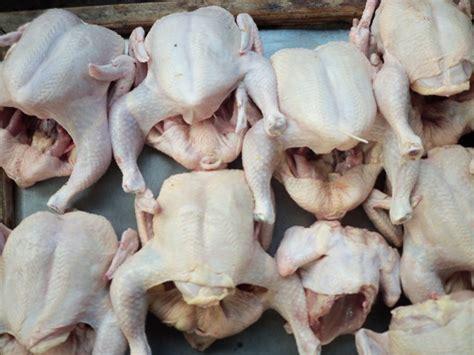Jual Pisau Potong Ayam supplier ayam jogja jual ayam potong jogja jual ayam