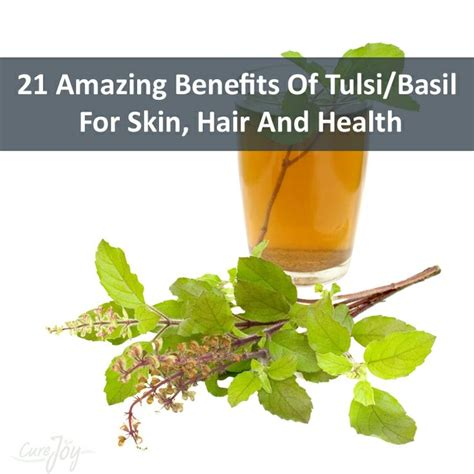 Tulsi Basil To Cure Skin Problems by 36 Best Images About Holy Basil Tulsi Tulasi On