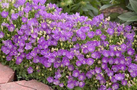purple flower garden top 10 purple plants for your flower garden birds and blooms