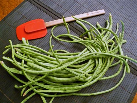 types of garden beans growing italian green beans centex cooks