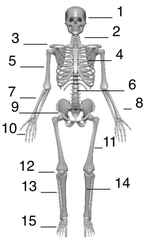Beschriftung Skelett by Skelett Und Knochen Www Mein Lernen At