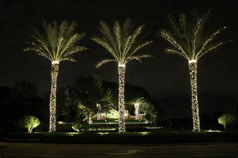 palm tree christmas lights tall palm tree lighting