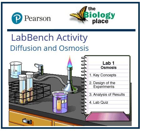 lab bench osmosis and diffusion curran thomas biology links