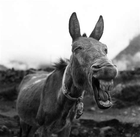 imagenes sorprendentes de natgeo las mejores fotos de national geographic cual te gusto