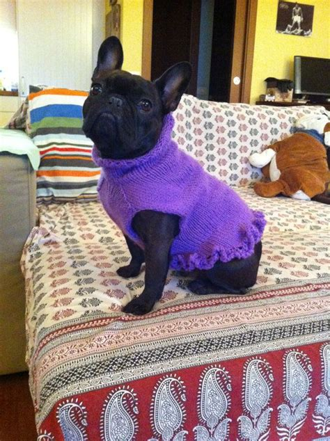 knitting pattern for english bulldog sweater french bulldog knit handmade ruffled dress sweater for