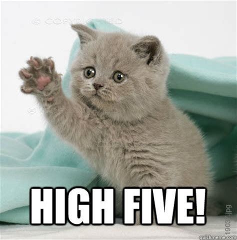 High Five Meme - high five cat memes quickmeme