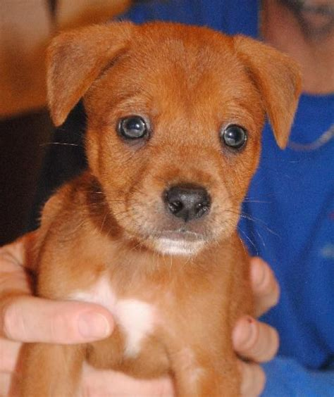denver puppy rescue dogs on adoption pets world