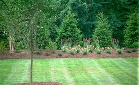 green tree landscaping landscape design for noise reduction evergreen trees