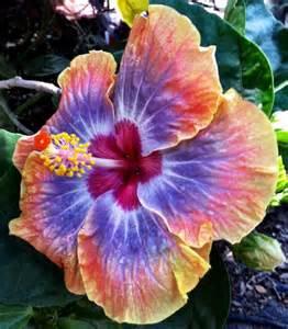 Pleasanton Flower Shop - cajun voodoo related keywords amp suggestions cajun voodoo