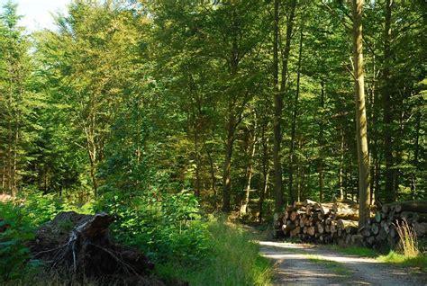 hängematte natur natur skovlegepladser i thy visitthy