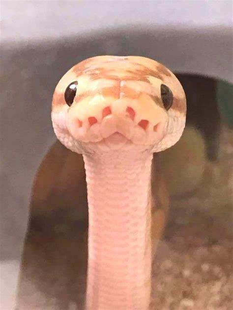 pin  jesus   snakes cute snake cute reptiles cute
