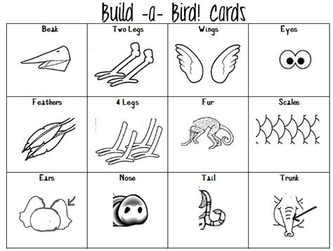 new year animal characteristics printable 15 best images of animal family classification worksheets
