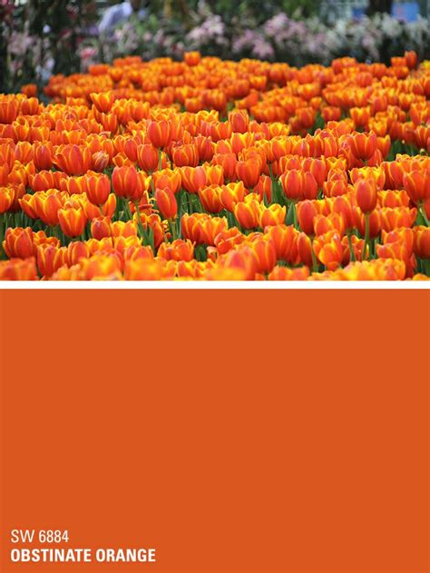 16 best images about orange paint sherwin williams on color pallets paint colors