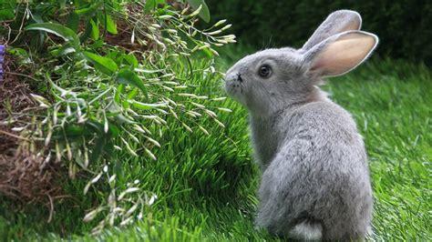 wallpaper cute rabbit your wallpaper cute rabbit wallpaper